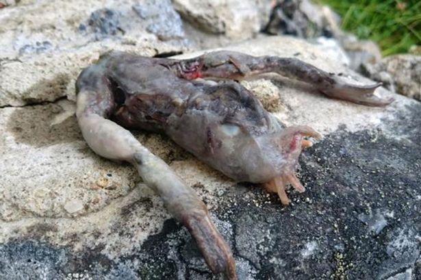 Một con vật có hình thù kỳ quái với hai chân trong suốt tìm thấy ở Na Uy