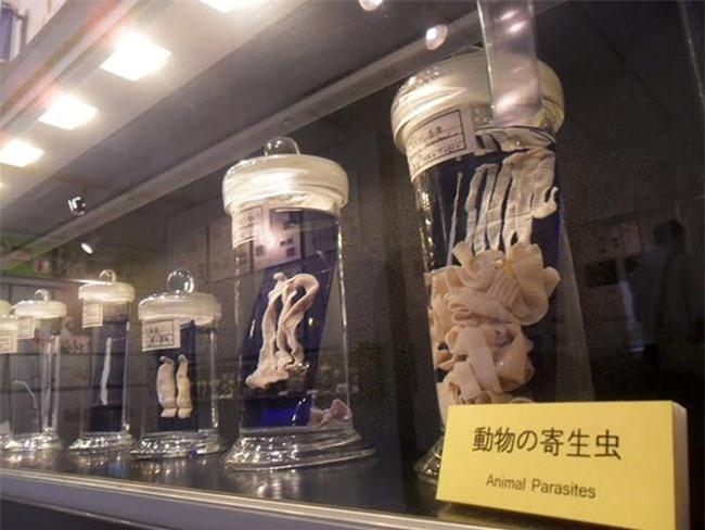 Rợn tóc gáy với những hiện vật kì quái mà viện bảo tàng trên thế giới lưu giữ - 10