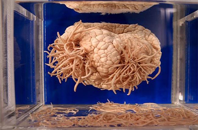 Rợn tóc gáy với những hiện vật kì quái mà viện bảo tàng trên thế giới lưu giữ - 11