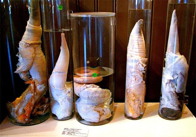 Rợn tóc gáy với những hiện vật kì quái mà viện bảo tàng trên thế giới lưu giữ - 12