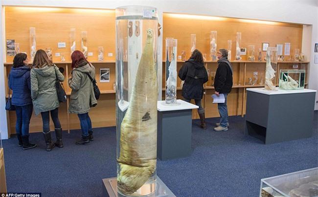 Rợn tóc gáy với những hiện vật kì quái mà viện bảo tàng trên thế giới lưu giữ - 13