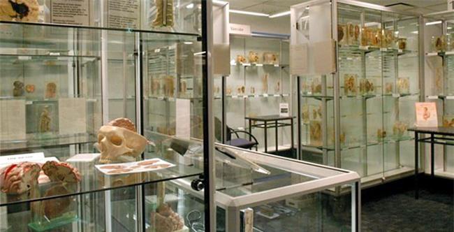 Rợn tóc gáy với những hiện vật kì quái mà viện bảo tàng trên thế giới lưu giữ - 8