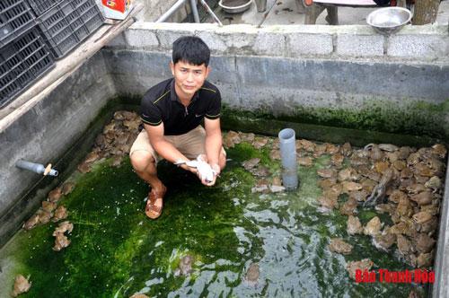 Chàng trai trẻ giới thiệu về mô hình nuôi ếch giống.