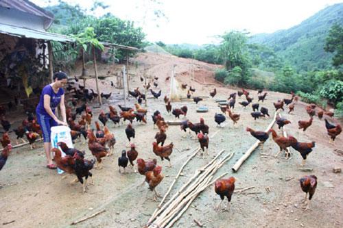 Kinh tế trang trại mang lại hiệu quả kinh tế cao cho người dân xã Xuân Quang (Ảnh: Tư liệu)
