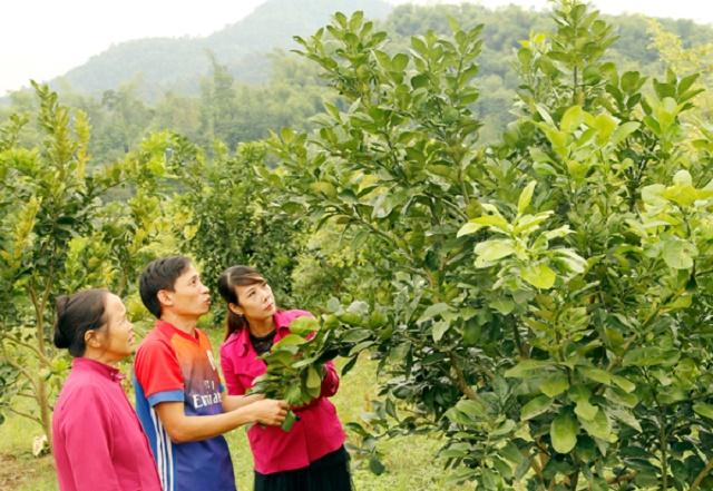Mô hình trồng cây ăn quả của anh Trần Công Điền cho thu nhập hàng trăm triệu đồng mỗi năm (Ảnh: TL)