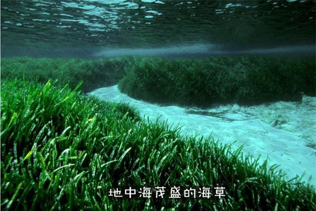 Tại sao sinh vật biển chủ yếu là động vật ăn thịt và hiếm khi nhìn thấy động vật ăn cỏ biển? - Ảnh 1.