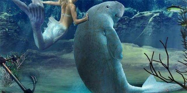 Tại sao sinh vật biển chủ yếu là động vật ăn thịt và hiếm khi nhìn thấy động vật ăn cỏ biển? - Ảnh 2.