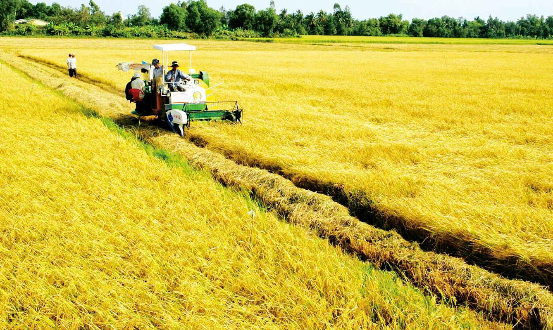 thúc đẩy hợp tác, liên kết trong tiêu thụ lúa gạo