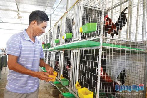 Ông Trị chăm sóc gà rừng