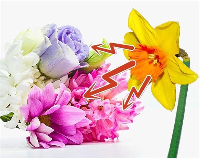 10 meo hay giu hoa tuoi lau chi em nen biet hinh 10