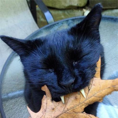 Nghi hoặc về chú mèo đen