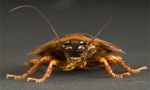 Các loài động vật nhỏ có khả năng chống lại phóng xạ - 1
