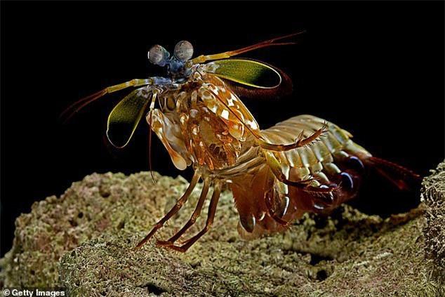 Có thể phóng vệ tinh bằng tay không? Các nhà khoa học khám phá bí mật của loài động vật mạnh nhất trong lịch sử - Ảnh 2.