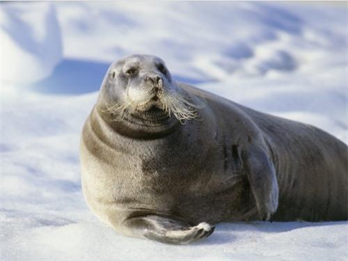 Những sự thật thú vị về động vật sống tại vùng Bắc cực - 3