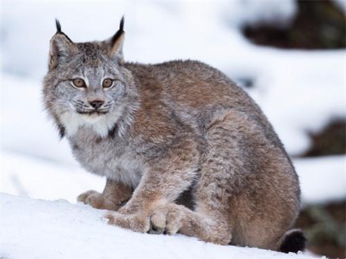 Những sự thật thú vị về động vật sống tại vùng Bắc cực - 5
