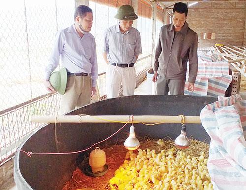 Mô hình chăn nuôi của anh được nhiều người đến học tập kinh nghiệm.