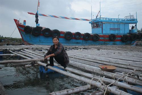 Nuôi hàu góp phần cải thiện cuộc sống. Ảnh : hoinongdan.thanhhoa.gov.vn
