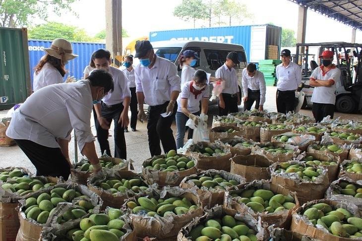 GIá trái cây xuống thấp khiến nông dân và doanh nghiệp gặp khó khăn.