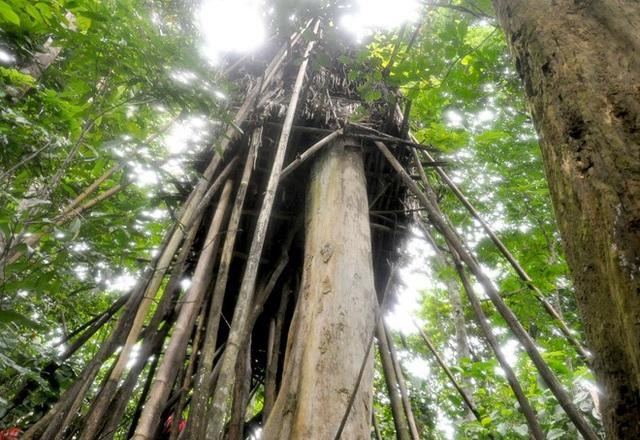 """Ngôi nhà trên cây của hai bố con chỉ rộng chừng 2m2Ngôi """"nhà"""" trên cây của hai bố con chỉ rộng chừng 2m2"""