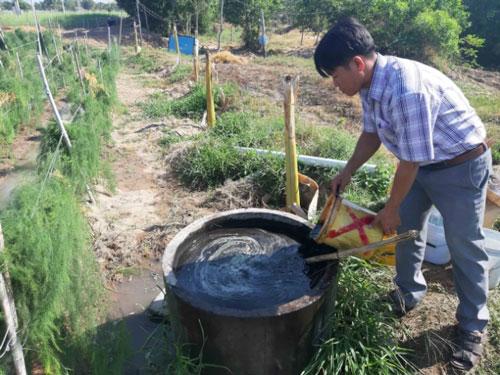Do chỉ dùng phân chuồng hoai mục và các chế phẩm sinh học nên măng tây xanh rất sạch, đạt tiêu chuẩn VietGAP. Ảnh: KS.
