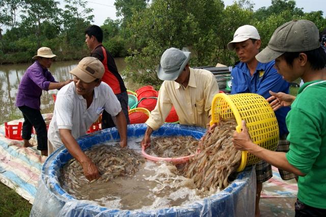 Cà Mau ưu tiên cho các doanh nghiệp vay để thu mua nguyên liệu thủy sản tạm trữ.