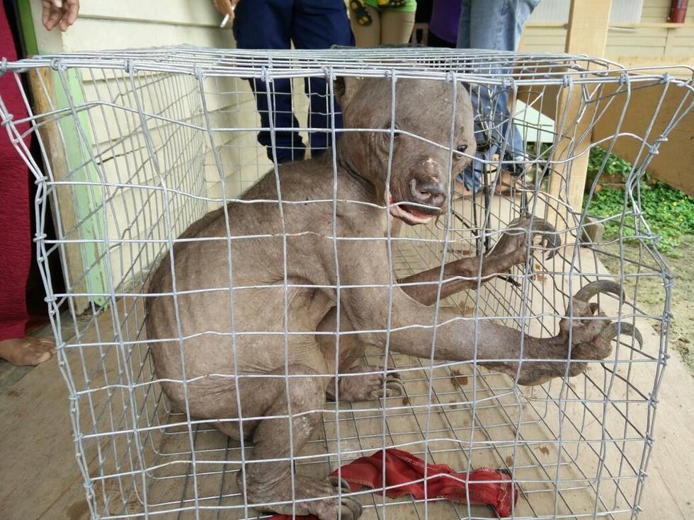Chú gấu chó trong đoạn bị nhóm người Malaysia đuổi đánh.