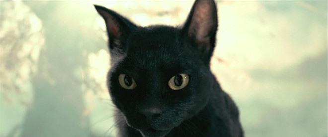 Võ Tắc Thiên: Không sợ trời, không sợ đất nhưng lại khiếp đảm những con mèo cho đến tận lúc chết - Ảnh 4.