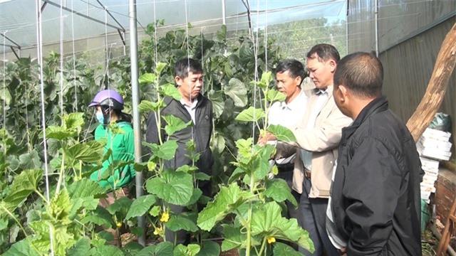 Thạc sĩ từ nước ngoài về trồng dưa lưới thu hàng trăm triệu đồng mỗi năm - 2