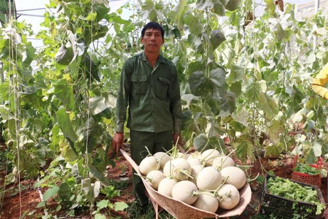 Thạc sĩ từ nước ngoài về trồng dưa lưới thu hàng trăm triệu đồng mỗi năm - 5