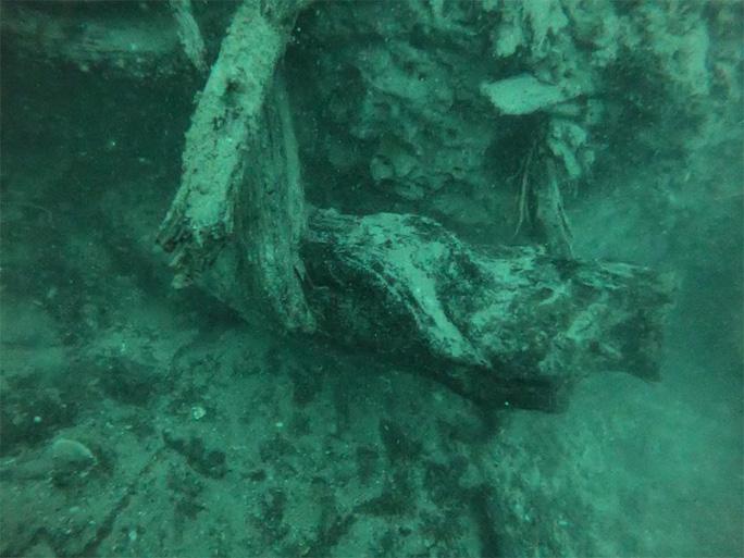 Khu rừng ma cổ đại chứa 300 quái vật nhỏ quý giá vẫn chìm phần lớn dưới nước - Ảnh do nhóm nghiên cứu cung cấp