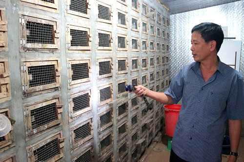 Mô hình chuồng chăn nuôi rắn khoa học của anh Nguyễn Thành Được