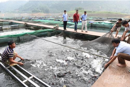 Hiện nay, tổng sản lượng thủy sản của huyện Na Hang đạt 850 tấn/năm. Ảnh: Đào Thanh.