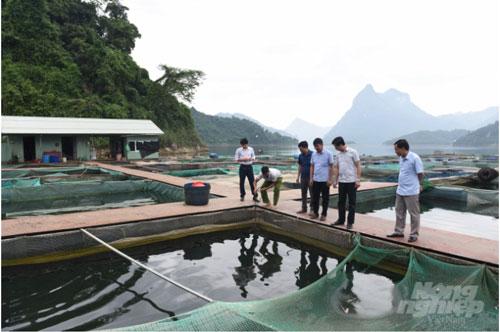 Nhờ có diện tích mặt Hồ thủy điện Tuyên Quang khá rộng, nhiều hộ dân của huyện Na Hang đã có thu nhập khá với nghề thủy sản. Ảnh: Đào Thanh.