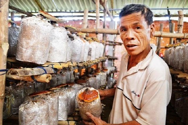 Người dân Mộ Đức phấn khởi vì mô hình trồng nấm đem lại hiệu quả kinh tế cao (Ảnh: TL)