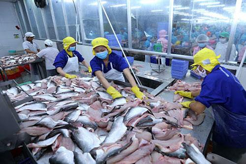 Xuất khẩu cá tra sang Asean sẽ hồi phục sau Covid-19 (Ảnh: Internet)