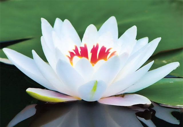 Đời người chỉ là nhìn hoa trong sương, nhìn trăng đáy nước - Ảnh 2