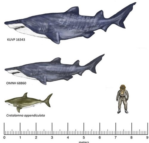 """Tìm thấy """"siêu cá mập"""" lớn tuổi hơn khủng long cổ đại - 1"""