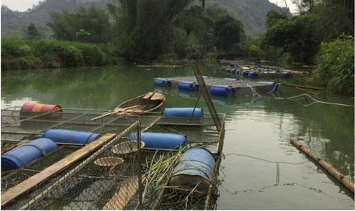 Nhiều hộ dân xóm Nà Phường, xã Độc Lập, huyện Quảng Hòa nuôi cá lồng đem lại hiệu quả kinh tế cao. Ảnh: Kông Hải.
