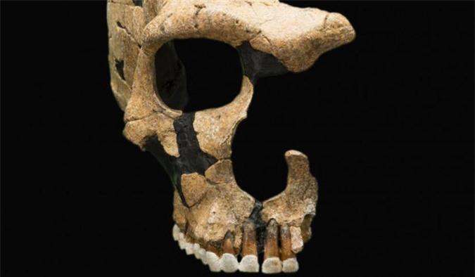 Sốc với sinh vật mới khiến 8 loài người khác tuyệt chủng - Ảnh 4.