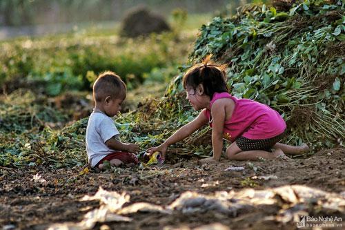"""""""Sân chơi"""" của nhiều em nhỏ mùa hè chính là thửa ruộng của gia đình mùa thu hoạch. Ảnh: Lê Thắng"""