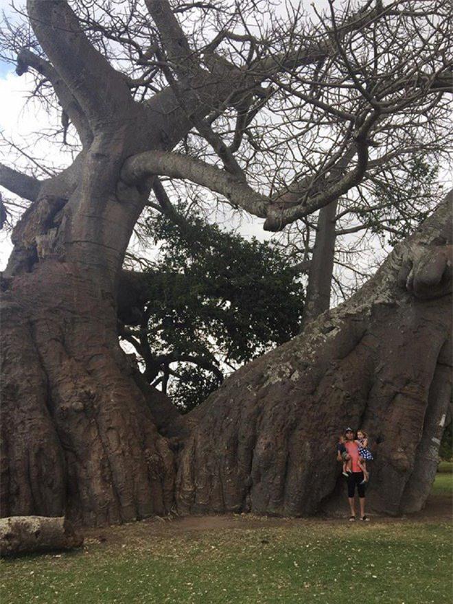 Bí mật tuyệt vời cất giấu bên trong cây đại thụ 6.000 năm tuổi - Ảnh 5.