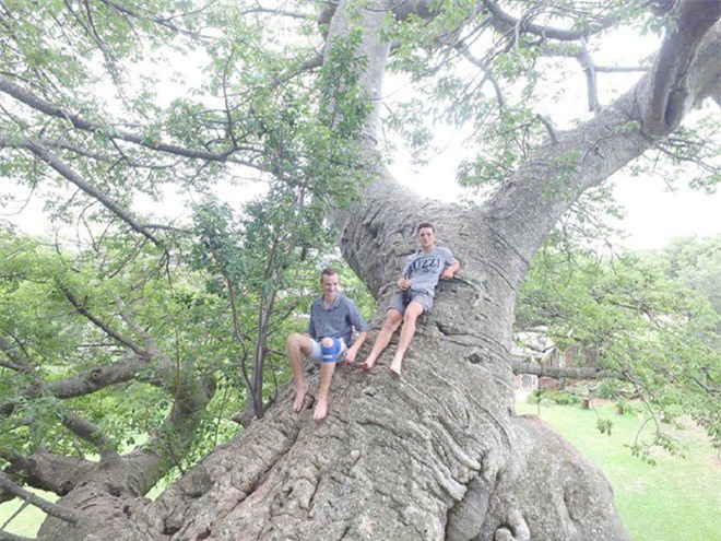 Bí mật tuyệt vời cất giấu bên trong cây đại thụ 6.000 năm tuổi - Ảnh 9.