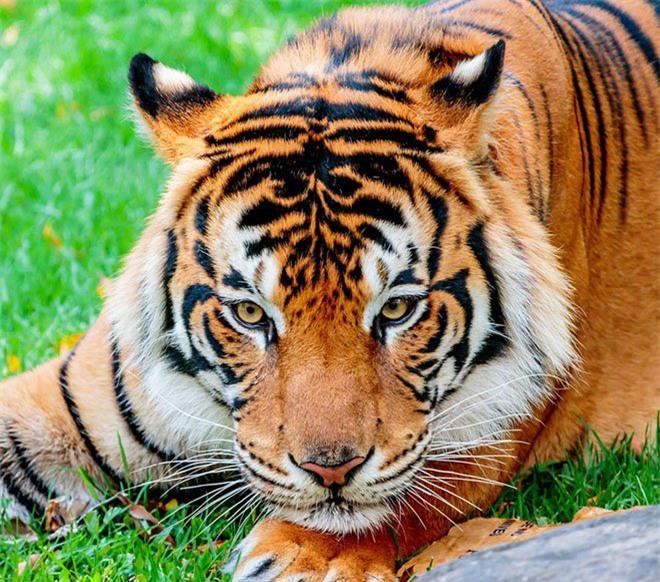 16 loài động vật quyến rũ nhất hành tinh thông qua cuộc bình chọn của 170.000 người - Ảnh 1.