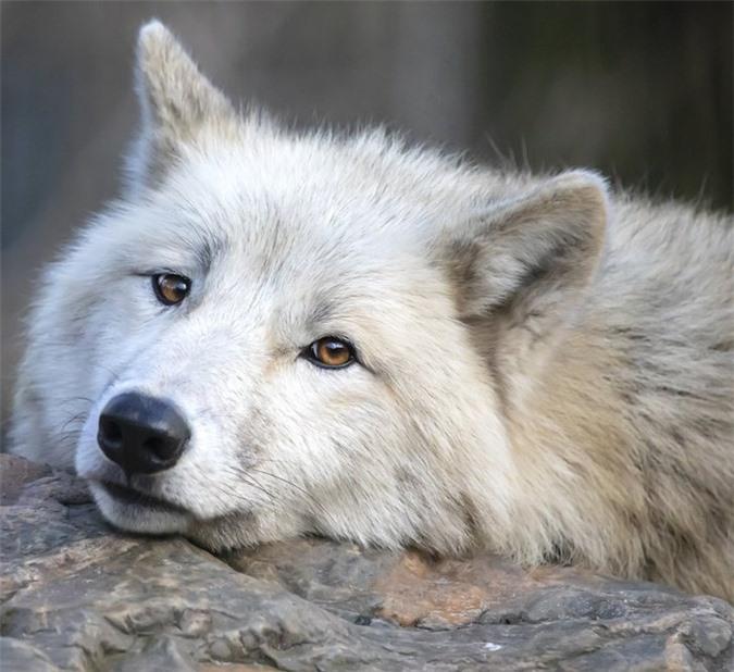 16 loài động vật quyến rũ nhất hành tinh thông qua cuộc bình chọn của 170.000 người - Ảnh 12.