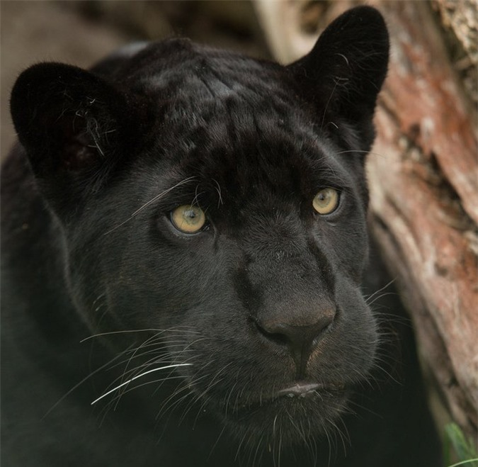 16 loài động vật quyến rũ nhất hành tinh thông qua cuộc bình chọn của 170.000 người - Ảnh 14.