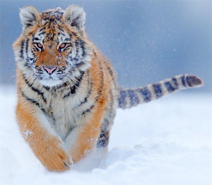 16 loài động vật quyến rũ nhất hành tinh thông qua cuộc bình chọn của 170.000 người - Ảnh 15.