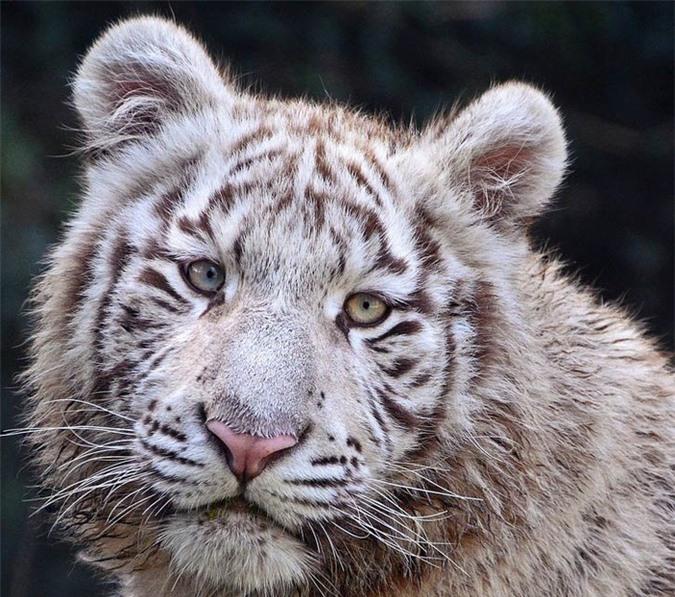 16 loài động vật quyến rũ nhất hành tinh thông qua cuộc bình chọn của 170.000 người - Ảnh 16.
