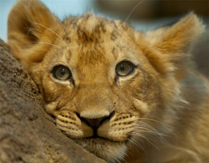 16 loài động vật quyến rũ nhất hành tinh thông qua cuộc bình chọn của 170.000 người - Ảnh 3.