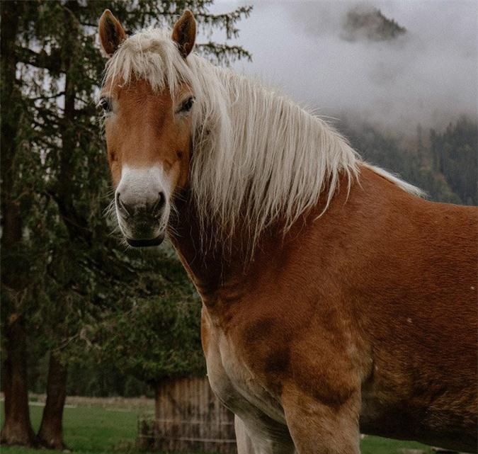 16 loài động vật quyến rũ nhất hành tinh thông qua cuộc bình chọn của 170.000 người - Ảnh 4.