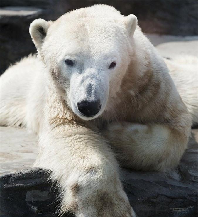 16 loài động vật quyến rũ nhất hành tinh thông qua cuộc bình chọn của 170.000 người - Ảnh 5.